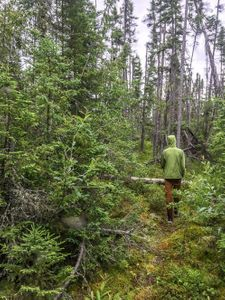 A good section on the Haven to Cyclops Portage