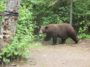 A_Bear_Knife_Lake_site_1255.jpg
