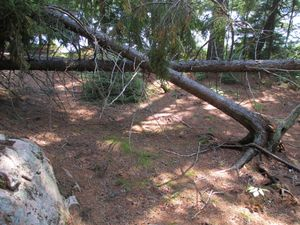 storm damage -campsite 118