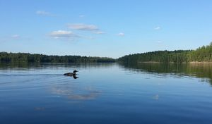 lone on Trout Lake