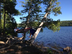 Hammocking on Alder