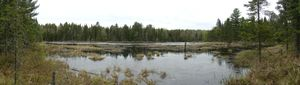 Beaver Pond on Lunetta-Hassel Portage