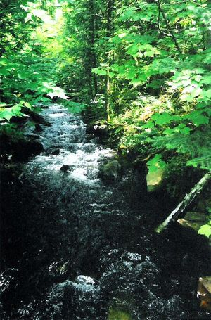 bwca10_-_Portage_Stream_Crossing.jpg