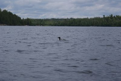 Loon came to say
