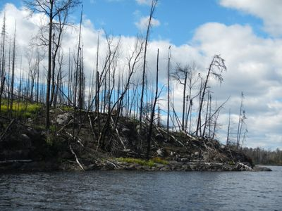 Pagami Creek Fire impacts on Insula Lake