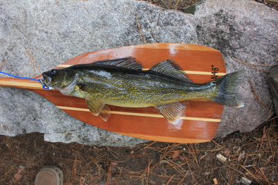 Walleye off Pocket lake campsite